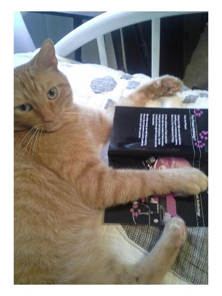K C Shaw's cat Jekyll approves